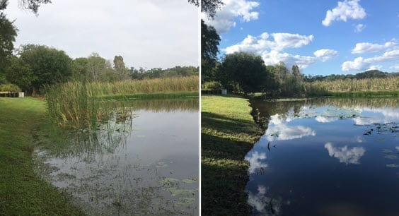 Orlando lake weed removal service