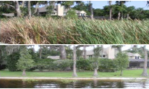 lakefront maintenance company in pinellas county fl
