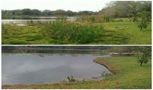 Lake Cleaning and Restoration Services