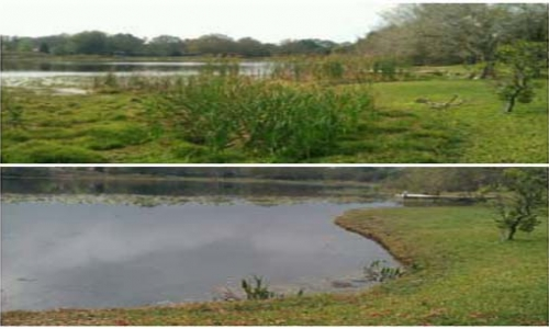 Lake Cleaning and Restoration Tampa