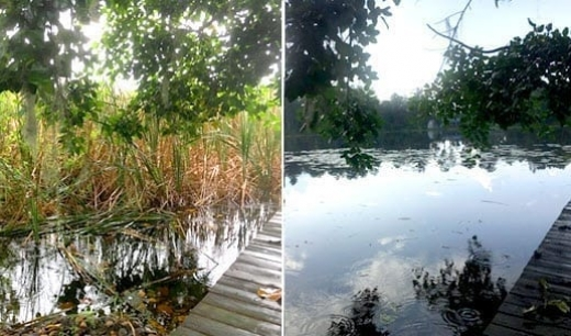 lake weed removal services tampa