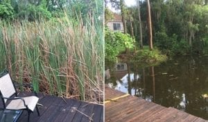 Lake treatment in oldsmar fl