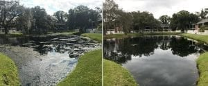 Pond Cleaning Service Before and After