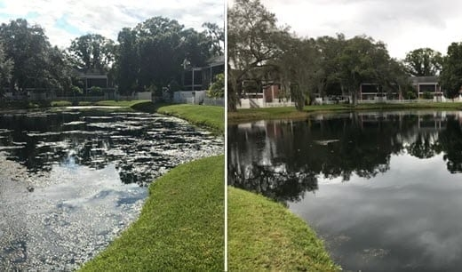 pond cleaning company before and after
